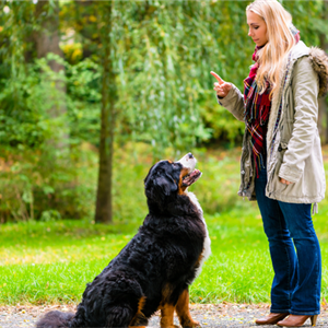 Positive Reinforcement Dog Training: Training Your Dog To Make Good Choices