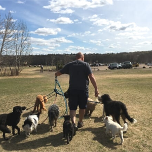 Our Top 8 Dog Walking Trails In The Edmonton Area